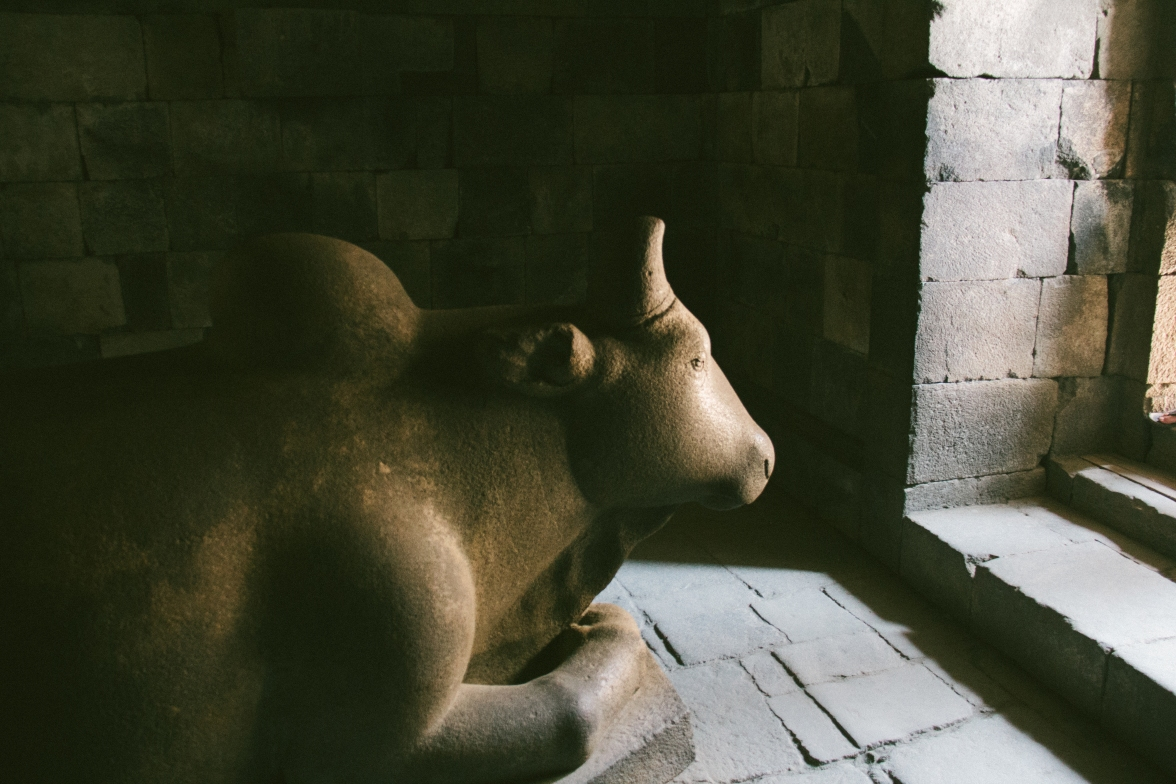 A cow in one of the temples.