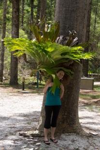 Giant Bromeliad