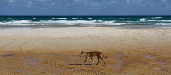 We saw a group of three of these sauntering down the beach.