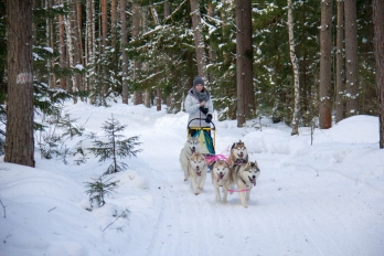 dmitrov-dogsledding-22