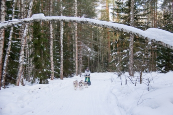 dmitrov-dogsledding-23