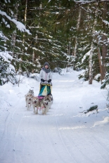 dmitrov-dogsledding-24