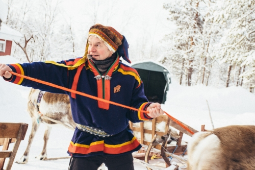 Our guide tying up the reindeer to the sleds.